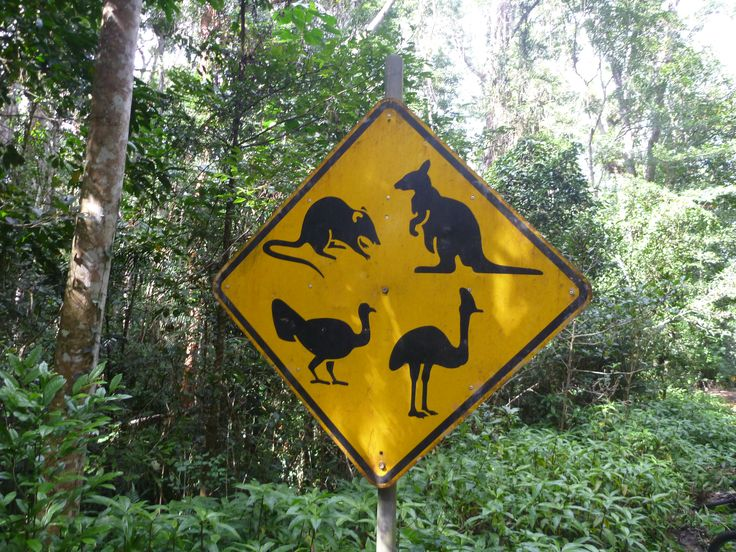 Unique road sign, a one off, ...tree kangaroo, scrub turkey, cassowary, bandicoot, Atherton Tablelands, far north Queensland.