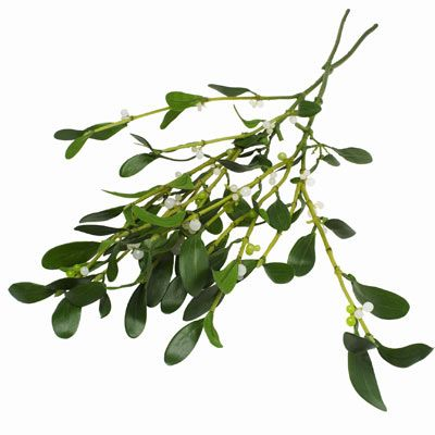 Hanging #mistletoe over a doorway during the holiday season is a tradition around the world. But have you ever stopped to think about the story behind it?