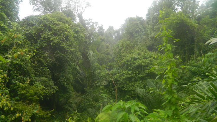 Gunung Leuser National Park, North Sumatra