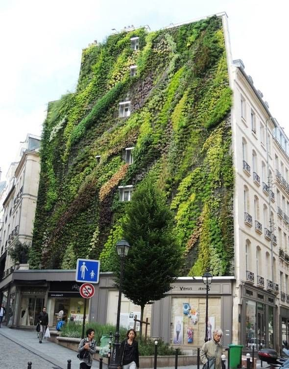 Mur-Vegetal-Patrick-Blanc-Aboukir-75002-Paris-00.jpg 590 × 752 pixels