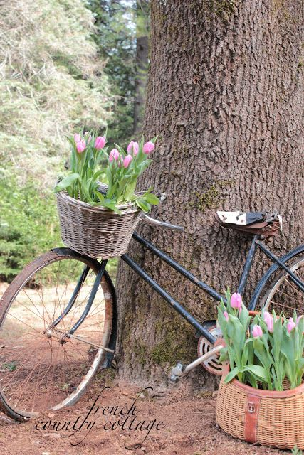 FRENCH COUNTRY COTTAGE: Vintage Bicycle Planter