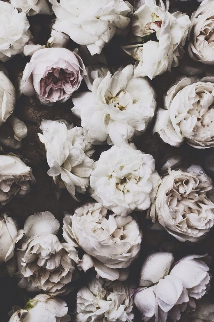 Vintage floral iphone wallpaper tumblr - Lycka Pretty Flowerstimeless Photographytumblr Photographytumblr Backgroundsiphone