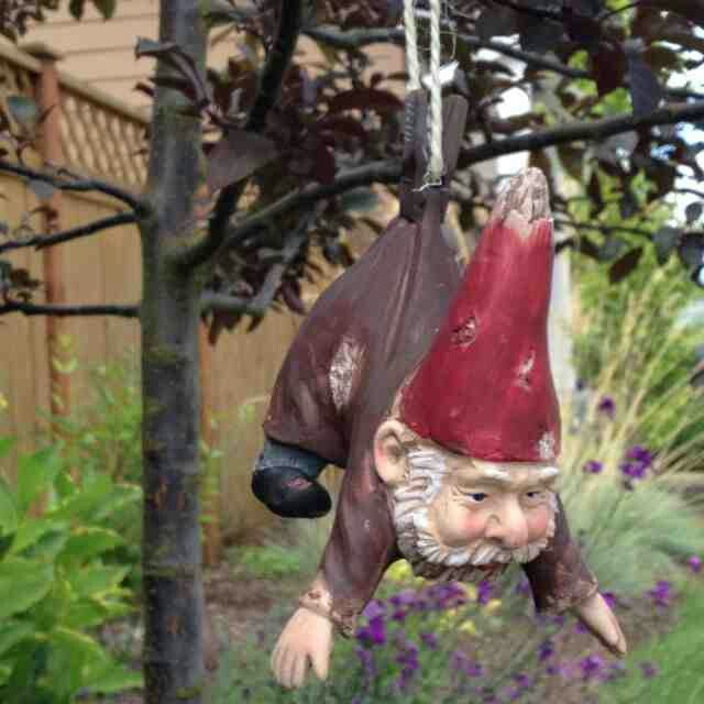Funny Gnomes: 563 Best Images About Gnomes . . .quirky Little Guys For