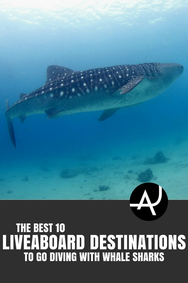 Best Liveaboard Destinations for Diving with Whale Sharks - Best Scuba Diving Destinations - Diving Bucket List - Adventure Vacations - Beautiful Locations and Places to Dive via @theadventurejunkies