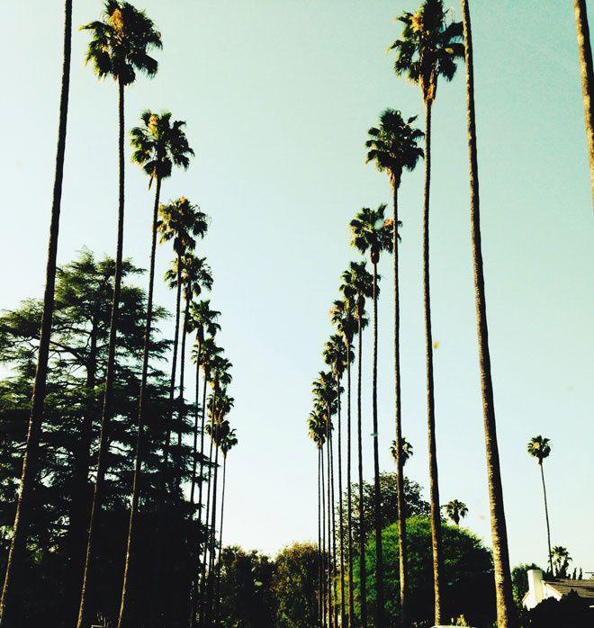 les 25 meilleures id es concernant californie palmiers sur. Black Bedroom Furniture Sets. Home Design Ideas