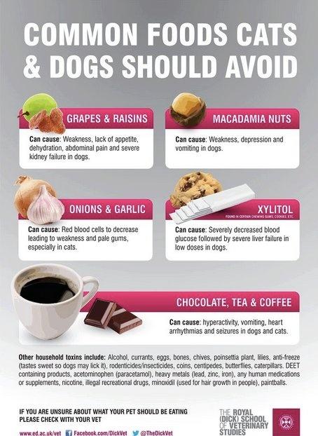 Where To Buy Breeders Choice Dog Food