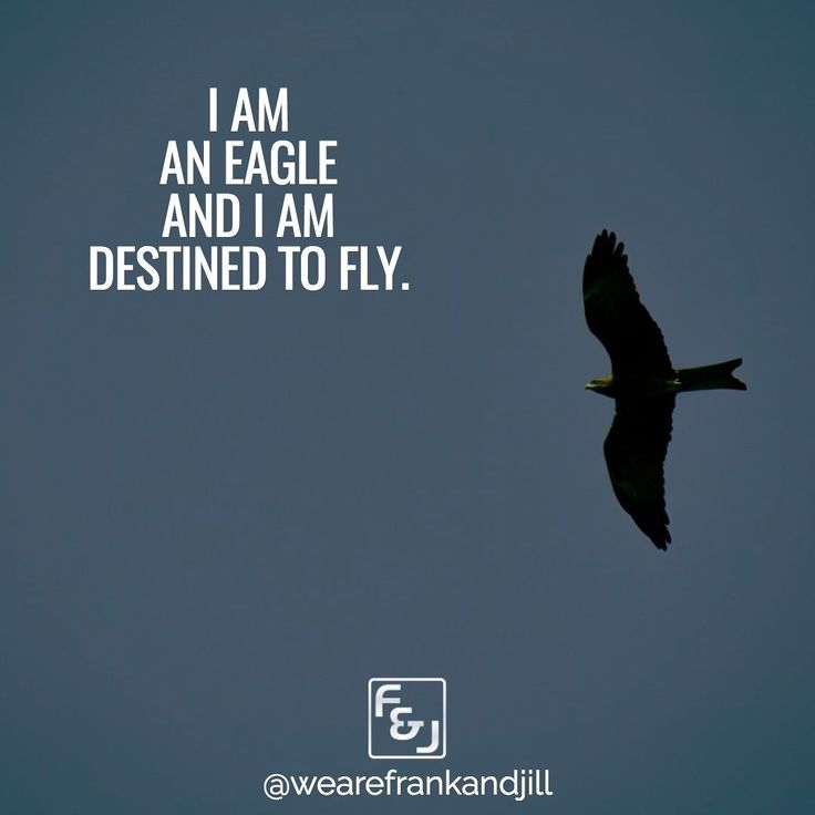 I am an eagle and I am destined to fly. (by Andy Andrews)  Double tap if you agree and tag someone who needs to see this. follow us @wearefrankandjill