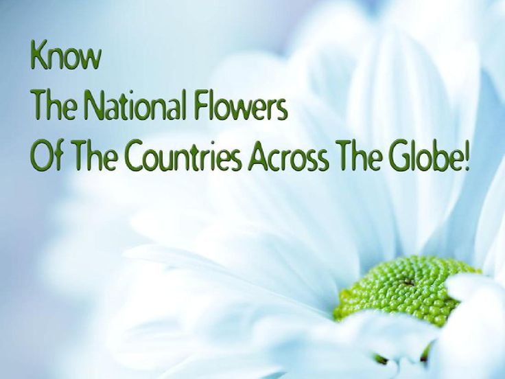 List of #National #Flowers Each country in the world has numerous national symbols,