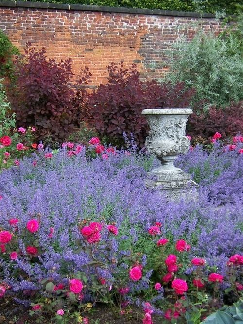 Urn surrounded by roses and lavender.  Love the idea of this!  May pull some stuff and plant more lavender and with Cotinus backdrop