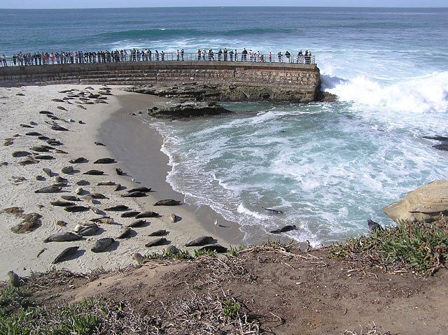 An Orange County Superior Court judge ruled May 3 that the City of San Diego's attempt to close the Children's Pool beach in La Jolla is unlawful...