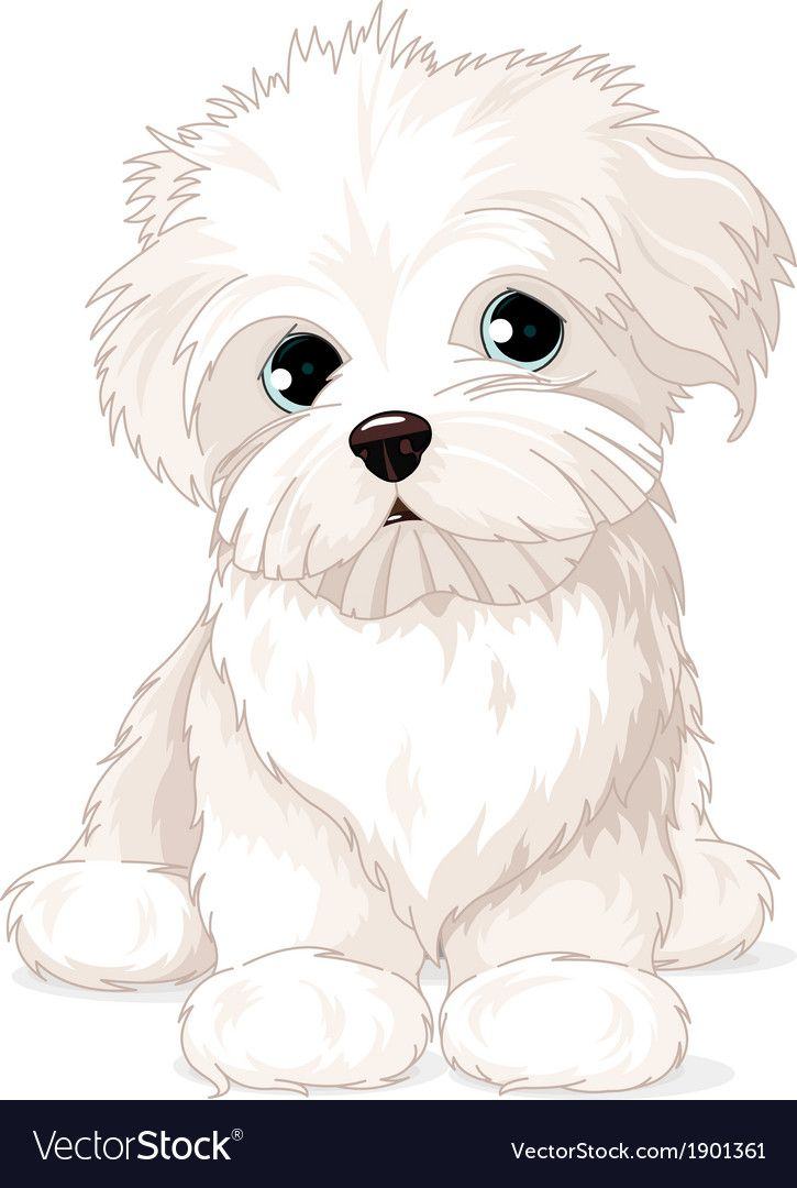 Maltese Puppy Dog Vector Image On Comment Dessiner Un Chien