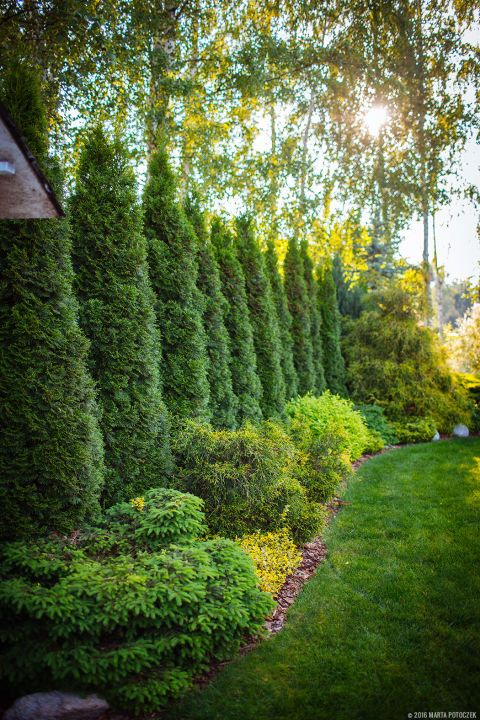 Tree Border:  Trees and bushes provide privacy along the border of the property.