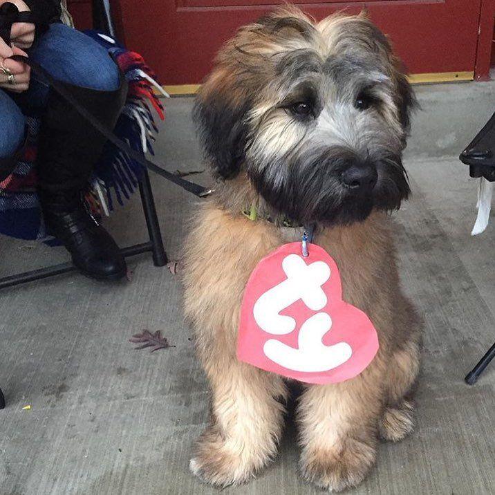 Homemade female dog costumes - photo#31