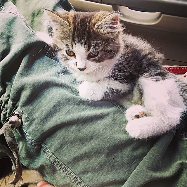 Farm kitten taking a ride to her new home. Love these