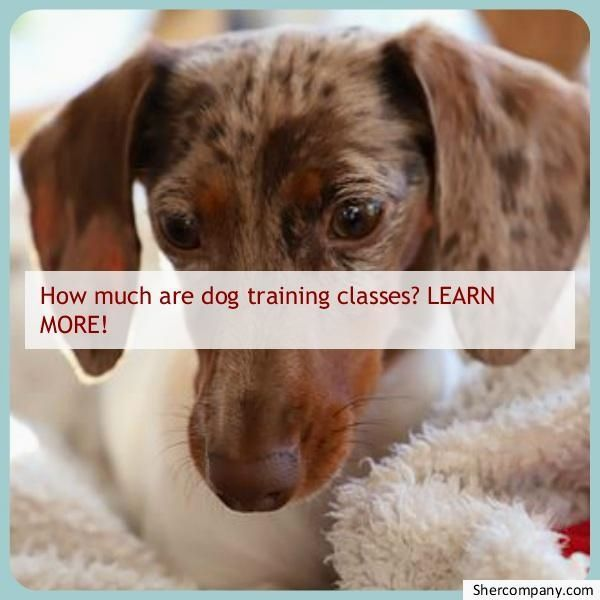 Crate Training An Older Dog 5 Tips To Success Crate Training