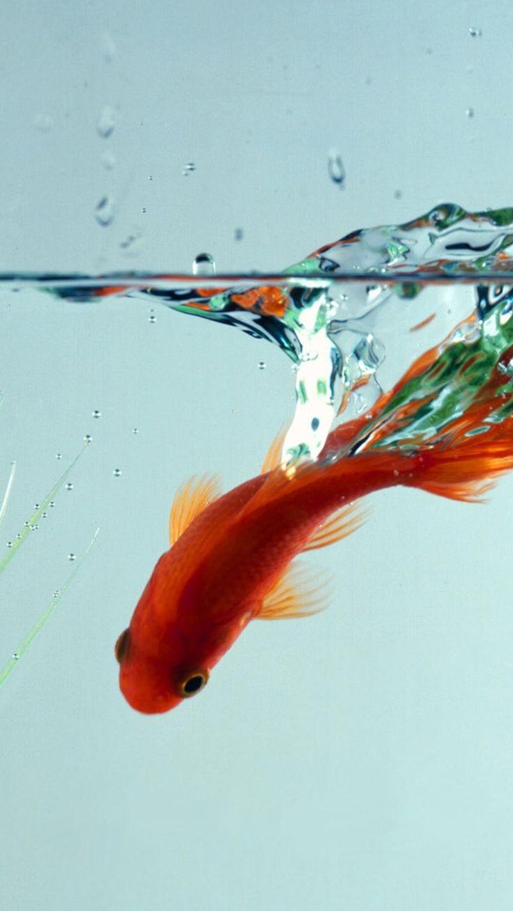 best pesh images on pinterest aquarium fish exotic fish and