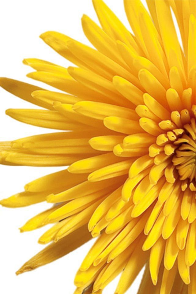 : Sunshine Yellow, Happy Yellow, Mellow Yellow, Coloryellow, Flower Power, Happy Color, Yellow Petals, Yellow Flower, Color Yellow