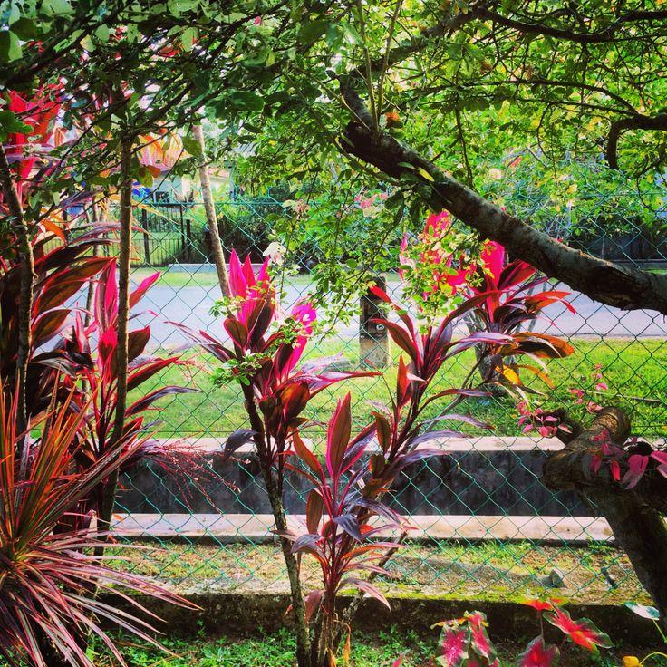 Plant fencing