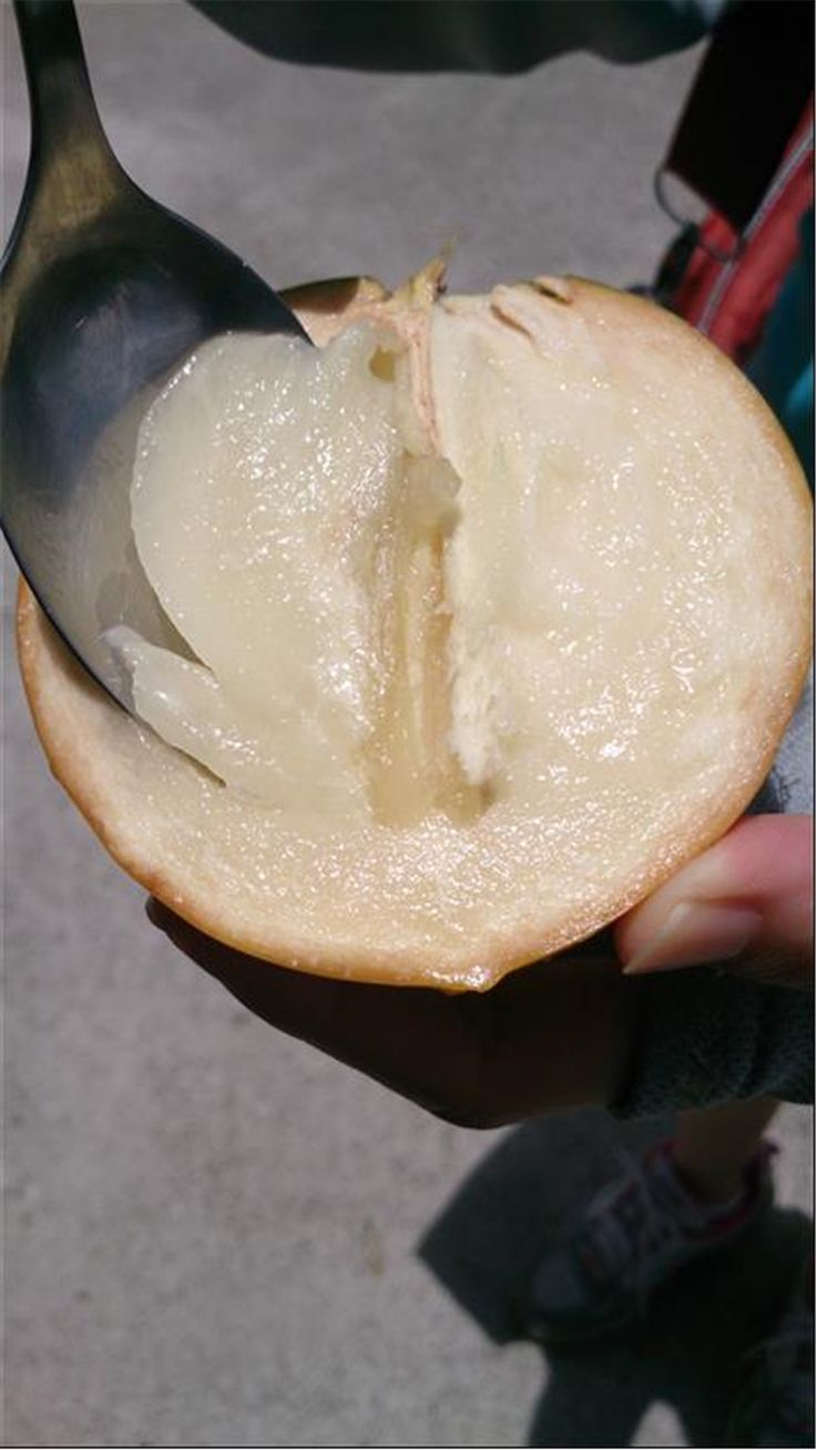 充滿膠質的黃金果,吃的時候有點小技巧,用湯匙挖起來吃,一口一口的甜蜜送進嘴裡剛剛好!靠近果皮的部 ...