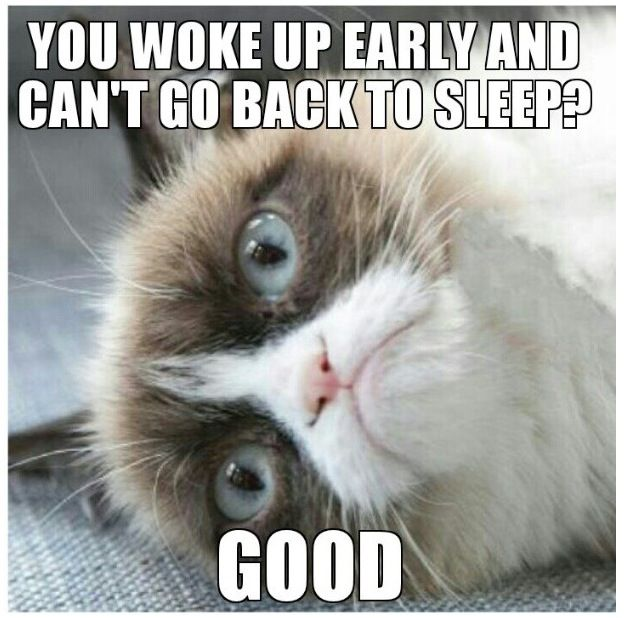 Funny Cant Sleep Meme : Woke up early and can t fall back asleep good grumpycat
