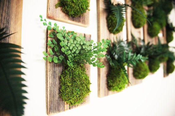 29 best kokedama green wall art images on pinterest for Zero maintenance plants