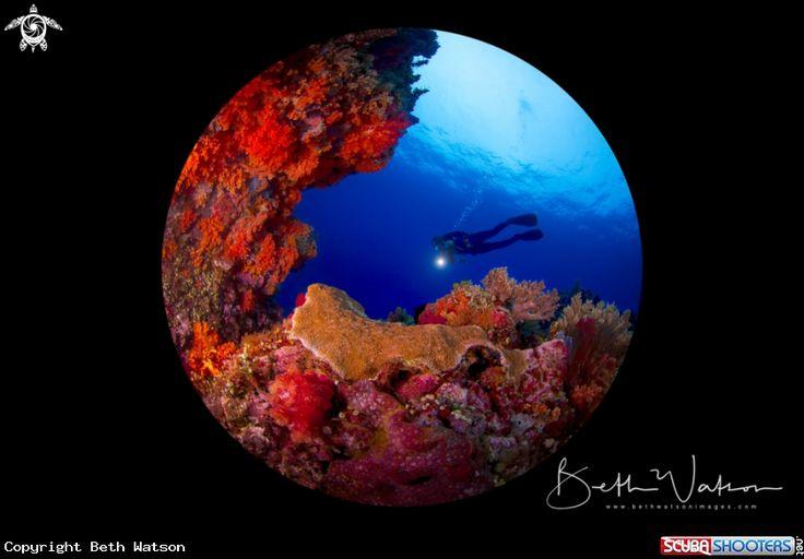 Rainbow Reef  in Bangka Island - Indonesia