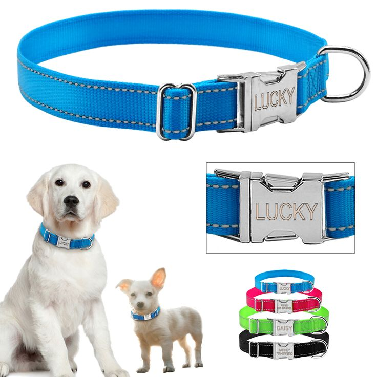 Treat your pet to this Reflective Nylon Personalised Dog Collar     We give back to local pet charities with every purchase    Get free shipping while stocks last!    https://www.pawsify.com/product/reflective-nylon-personalised-dog-collar/