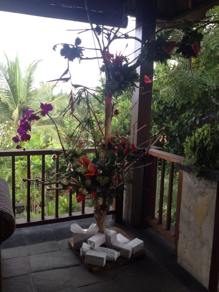 A christmas flower #ubud #bali