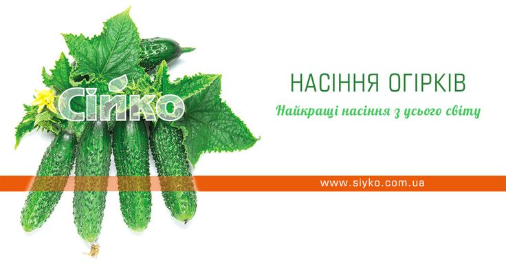Насіння огірків - Сійко