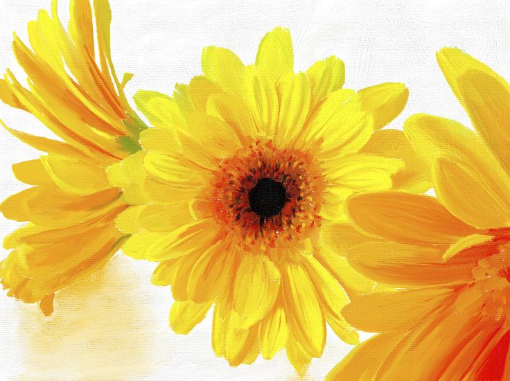 Sunshine Yellow Gerbera  brilliant golden yellows, almost liquid, melting and sensuous, I can imagine the healing warmth of the sun caressing the skin on my arms.