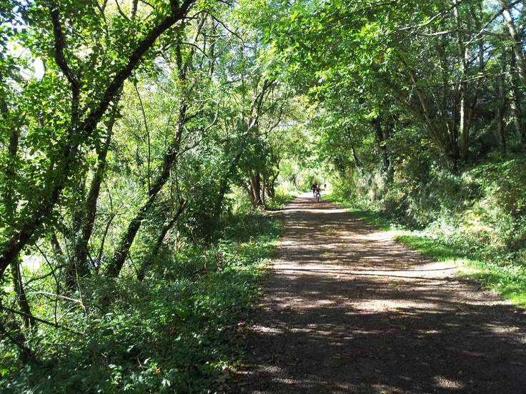 The Camel Trail from Wadebridge to Bodmin. A woodlands and river experience.