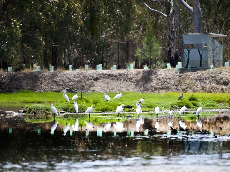 Visit the beautiful Narrandera Wetlands situated less than a kilometre from the Narrandera Visitor Information Centre, directly across the road from the Brewery Flat Oval, picnic area and Murrumbidgee River view, and adjacent to the Sturt and Trunk Route memorials. Home to an amazing variety of native birds, the Narrandera Wetlands rests in tranquil surrounds guaranteed to refresh you. Take advantage of the bird hides to study the activity on the water. The hides are painted in local…