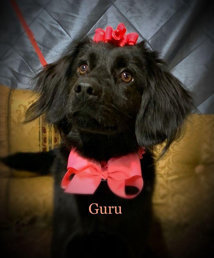 Adopt guru on petfinder help homeless pets dog adoption