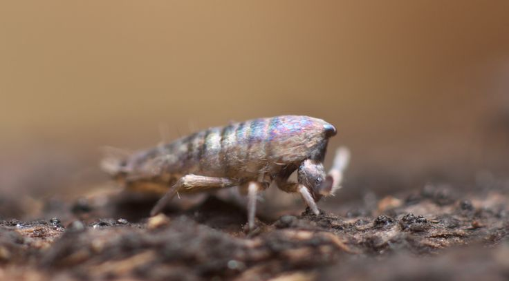 All about Collembola/springtails — A Chaos of Delight