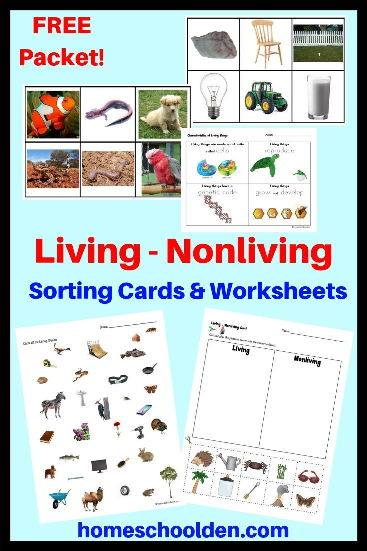 Free Living Nonliving Cards And Worksheets This Free Unit Will Help Your Kids Lear Kindergarten Science Living And Nonliving Kindergarten Science Curriculum [ 1102 x 735 Pixel ]