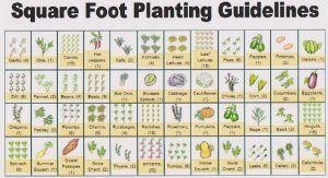 Planning For Organic Vegetable Gardening http://www.healthyorganics.net/