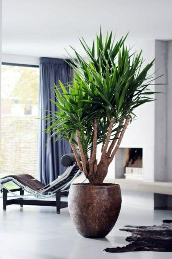 palmlilie yucca wohnzimmer liege pelzteppich