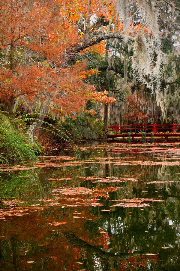 Red Bridge And Pond, Magnolia Gardens, Charleston, South Carolina By Doug  Hickok