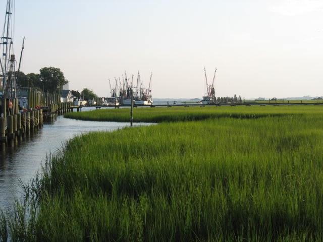 marsh in SC
