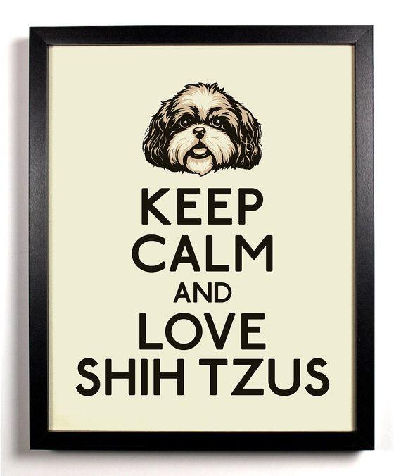 miss my shih tzu :(