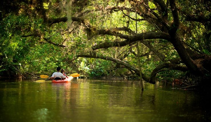Kayaking on the Estero River, Fort Myers, Florida. Simply beautiful!