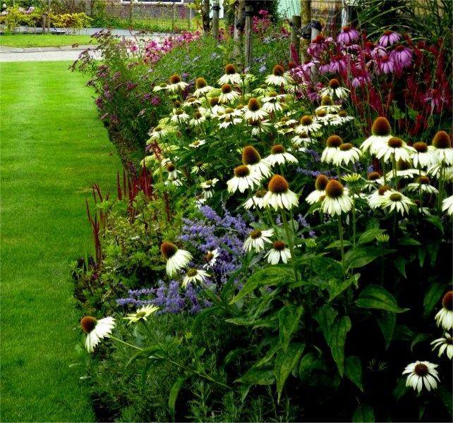 17 best ideas about perennial grasses on pinterest for Ornamental grass border plants