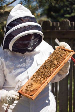 Wonderful information about bees, honey, bees wax. Great how-to information beekeeper