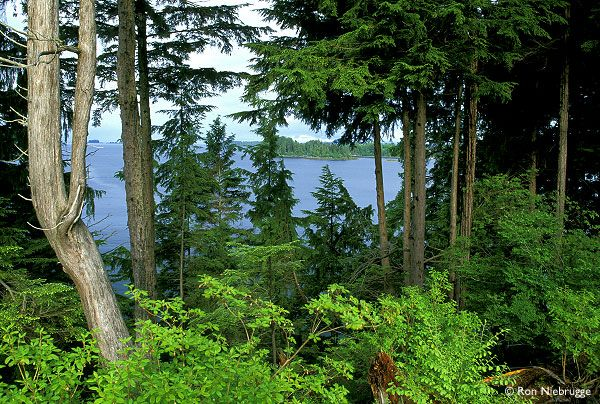 The Tongass National Forest in southeastern Alaska is the largest national forest in the United States at 17 million acres (69,000 km²). The Tongass National Forest is home to about 75,000 people who are dependent on the land for their livelihoods. Several Alaska Native tribes live throughout Southeast Alaska, such as the Tlingit, Haida, and Tsimshian. 31 communities are located within the forest; the largest is Juneau, the state capital, with a population of 31,000.