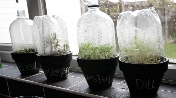Want to get a jump start on your gardening this spring? These DIY seedling greenhouses are the perfect way to do just that!