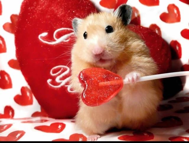 Happy Saint Valentines Day