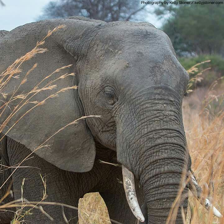 African Wildlife Foundation...     Africa is home to world's most iconic wildlife but illegal poaching might destroy it forever. Endangered wildlife are slaughtered so that a single body part - like tusks, pelts or bones - can be illegally sold for huge s