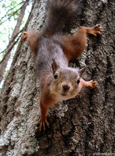 This is literally the reason why I am afraid of squirrels...I had one look at me like this and was a foot away from my face...No thanks