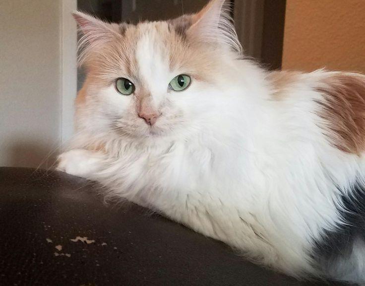 Sophie looking intense