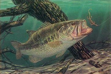 no trespassing largemouth bass